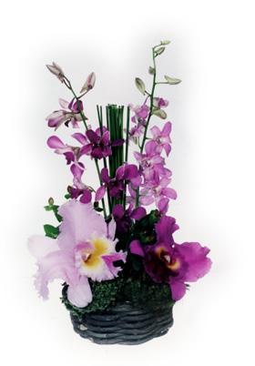 20051226095452-orquideas.jpg