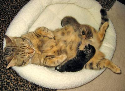 20090704011329-cat01.jpg