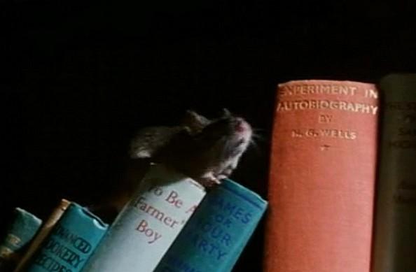20101105210247-raton.jpg
