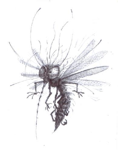 20110725125515-mosquito-jose-frigerio.jpg